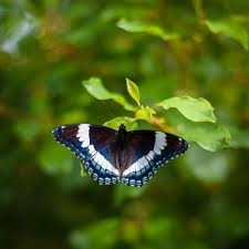 butterfly at rest trevor labarge