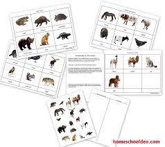 animal unit vertebrate invertebrate animals worksheet packet 40