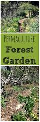 permaculture 101 what is a forest garden permaculture