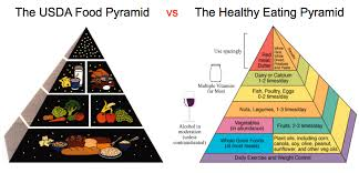 the usda food pyramid vs an evidence based pyramid georgetown
