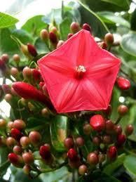 530 best caribbean tropical flowers plants images on pinterest