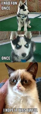 Grumpy Cat Meme I Had Fun Once - 63 best grumpy dog and grumpy cat images on pinterest funny