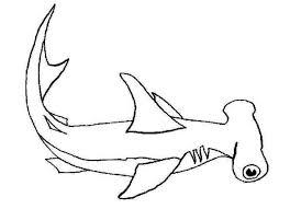 hammerhead shark coloring hammerhead shark coloring