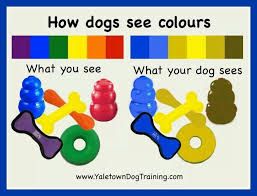 2 types of boxer dogs how dogs see colors keep this in mind if you are doing target