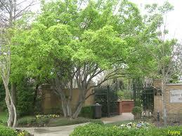 64 best azaleas images on pinterest flowering shrubs