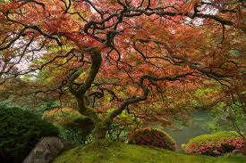 Different Types Of Japanese Gardens - gem of the pacific northwest the portland japanese garden the