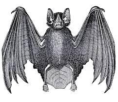 bat illustrations free download clip art free clip art on