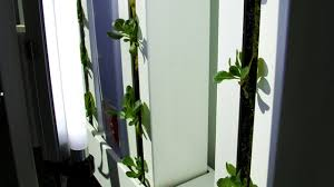 grow a vertical garden indoors with the farm wall light kit youtube