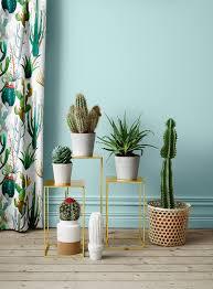 cactus home decor para el hall pottery pinterest cacti decoration and plants