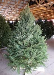 best place to buy christmas trees if you live in mississippi