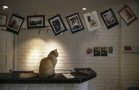 your cat can now stay in their own fancy five star hotel metro news