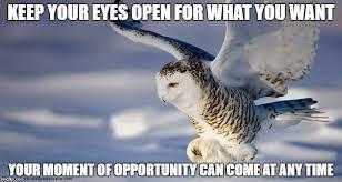 Owl Memes - vague motivational owl memes album on imgur