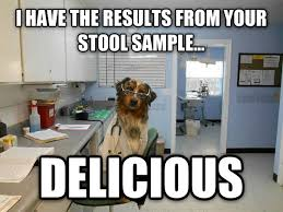 Dog Doctor Meme - follow up with doctor dog meme guy
