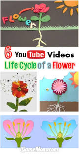Life Cycle Of A Flowering Plant - 6 science youtube videos about life cycle of a flower science