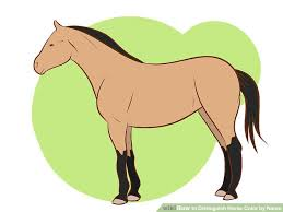 how to distinguish horse color by name 4 steps with pictures