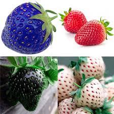 100pcs red blue black strawberry climbing strawberry seeds fruit