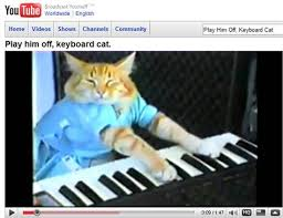 Cat Playing Piano Meme - happiness everytime hilarious pinterest hilarious