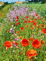 2219 best everything plants and flowers images on pinterest