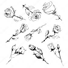 sketch of roses on a white background u2014 stock vector sashulia