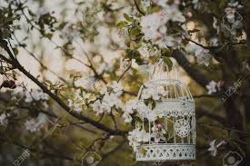 bird cage on the apple blossom tree in sunset stock photo