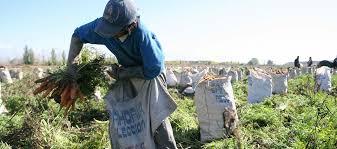 uatre nueva escala salarial para los trabajadores agrarios infoco uatre dio a conocer la nueva escala salarial para