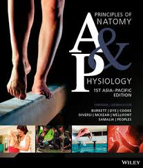Anatomy And Physiology Glossary Wiley Principles Of Anatomy And Physiology 1st Asia Pacific