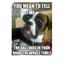 Dog At Vet Meme - meme funny