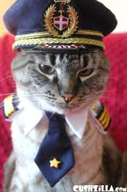 Cat Suit Meme - create meme the cat captain angry the cat captain angry the cat