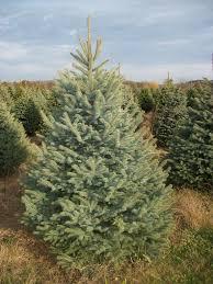 christmas tree farm utah christmas lights decoration