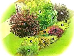 Privacy Garden Ideas Privacy Gardening Best Privacy Plants Images On Privacy Plants