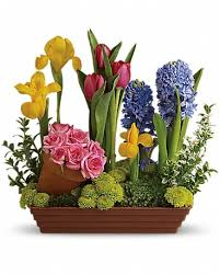 Flower Delivery San Francisco San Francisco Florist Flower Delivery By The Delicate Daisy