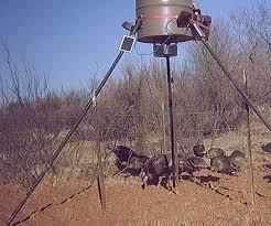 hog hunting lights for feeder gave up on feeder lights texasbowhunter com community discussion
