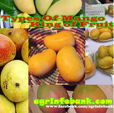 Mango King types of mango king of fruit agriculture information bank