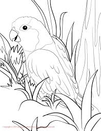 parrot coloring pages all coloring pages