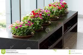 Vinca Flower Information - vinca flower plant stock photos image 32351733