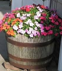 wine barrel planter container gardening pinterest wine