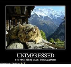 Unimpressed Meme - search icanhascheezburger memes on me me