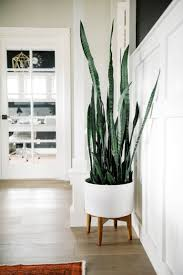 one room challenge snake plant planters and snake