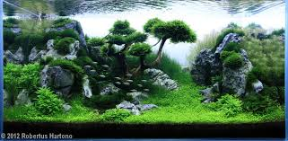Aquascap Planted Tank Reaching By Robertus Hartono Aquarium Design