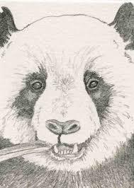 panda bear pencil drawing more info