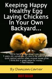 Can You Have Chickens In Your Backyard Chicken Keeping Secrets