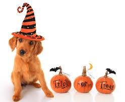 halloween dog toys life unleashed pet travel and pet transportation
