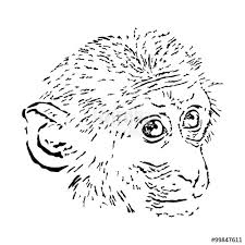 monkey face sketch animal tattoo vector illustration