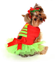 dog candy corn witch costume costume contest doggie dog coats my online pet shop