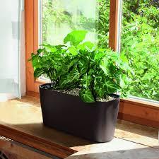 self watering indoor planters lechuza windowsill self watering indoor planter hayneedle