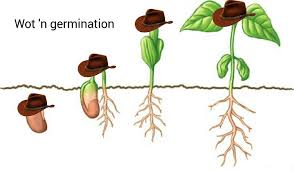 Meme N - wot n germination what in tarnation know your meme