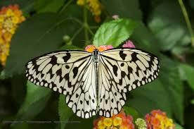 butterfly feeding desktop wallpaper