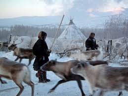 siberia u0027s nomadic nenets home is where the pasture is the