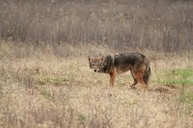 Kentucky wildlife images Wildlife removal services trifecta wildlife services jpg