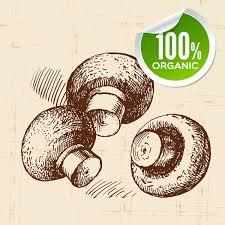 mushroom hand drawn sketch vector vector food free download